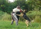 Защитная и защитно-караульная службы