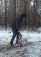 Обучение и воспитание щенков и подростков