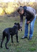 Занятия со щенками - осень 2018_14