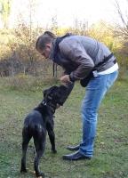 Занятия со щенками - осень 2018_15